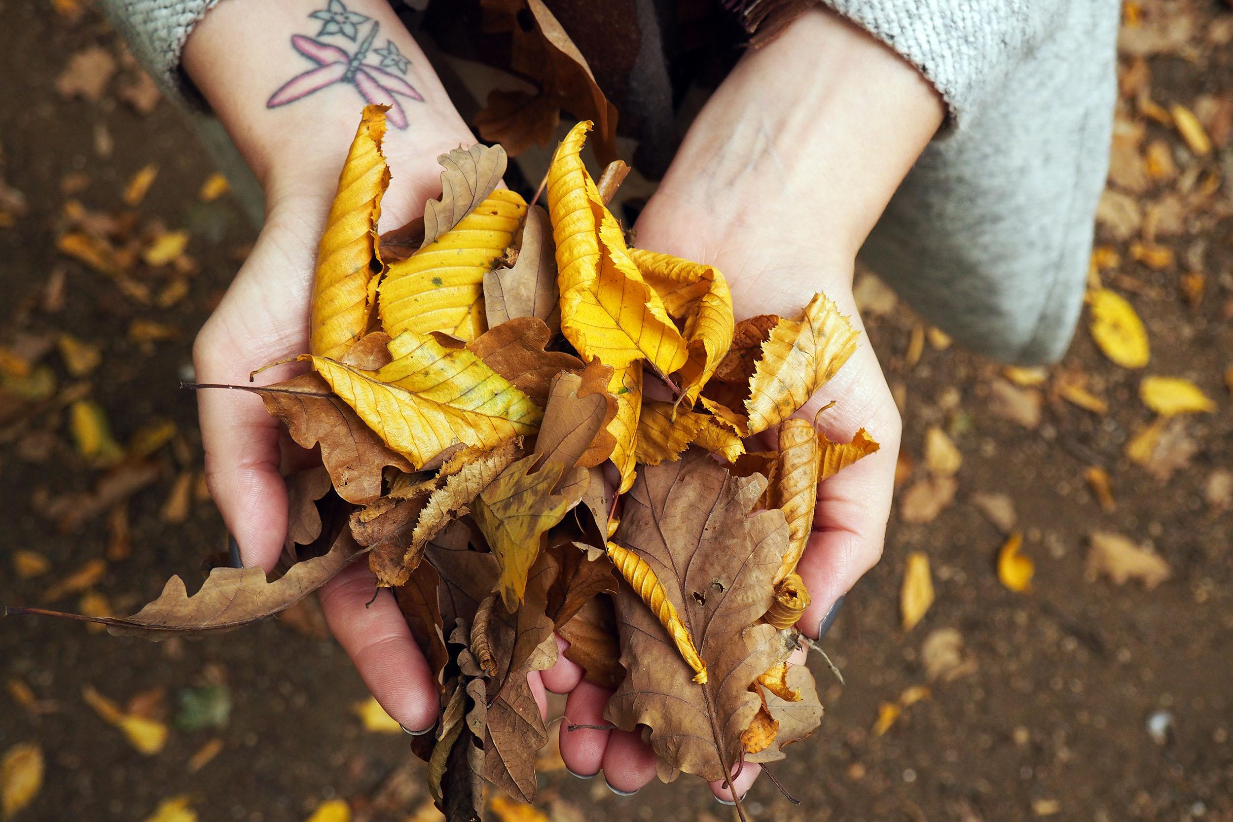 Autumn Leaves - 11