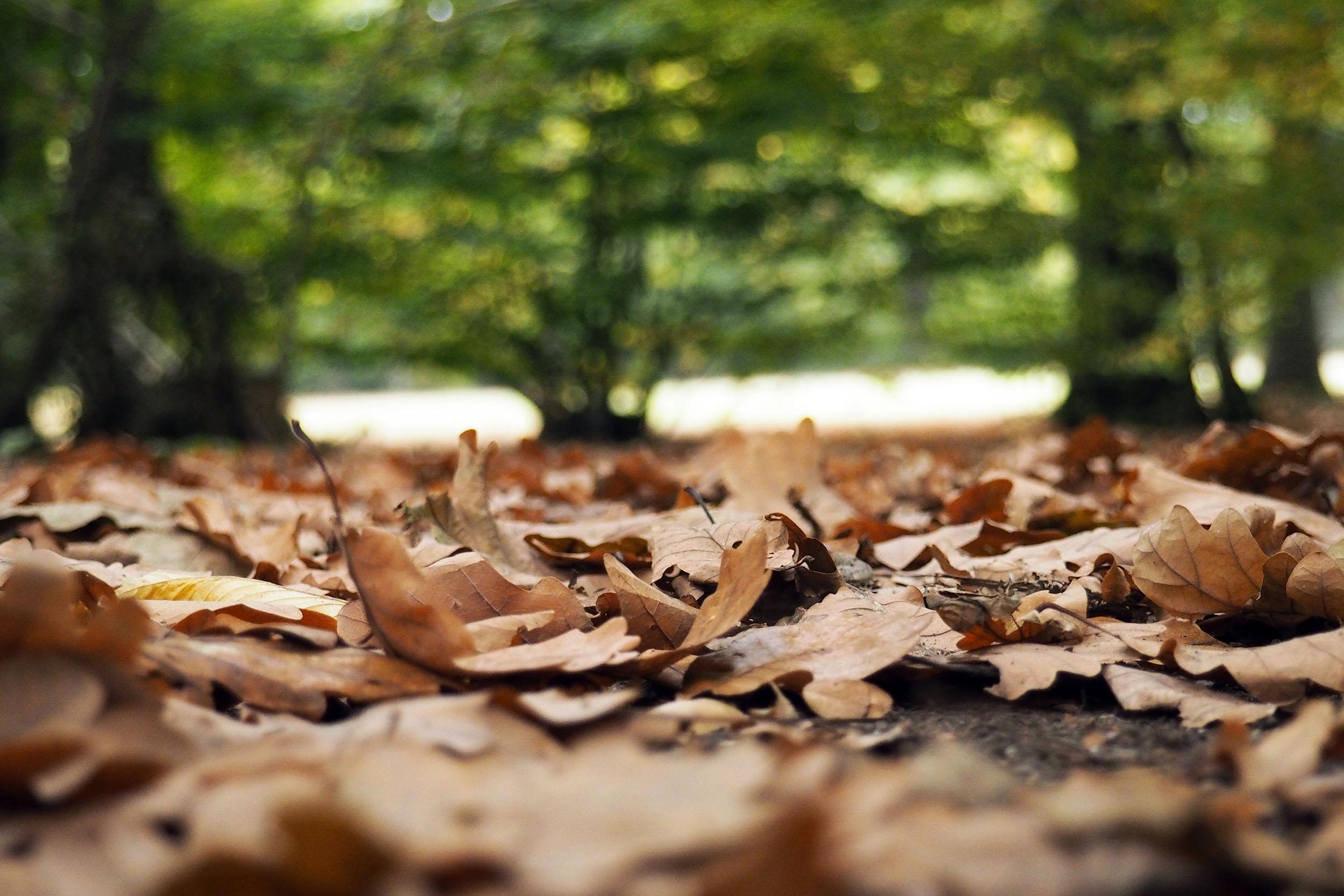Autumn Leaves - 8
